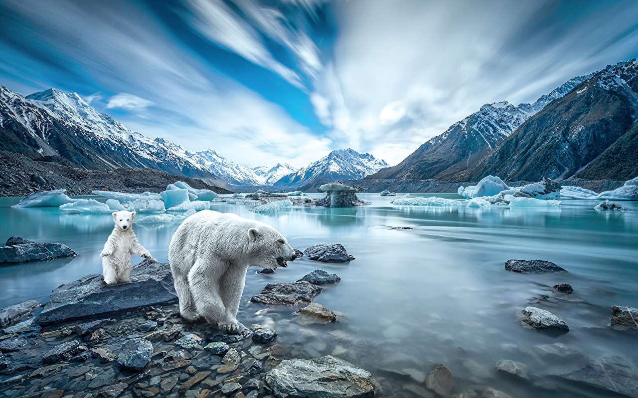 Desktop Wallpapers Polar bears Cubs Ice Nature Mountains stone Animals mountain Stones animal