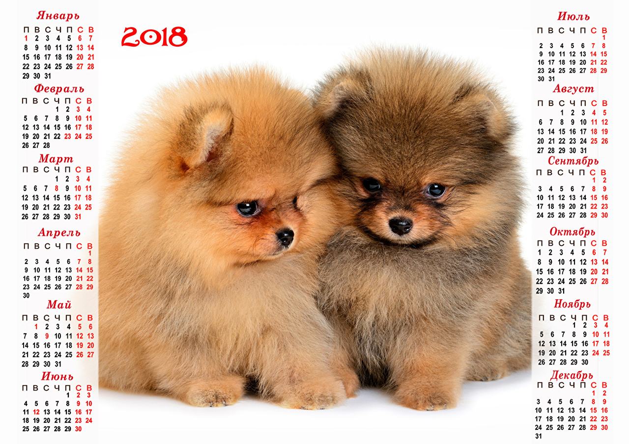 Pictures 2018 Puppy Spitz dog New year Russian Two Calendar animal puppies Dogs Christmas 2 Animals