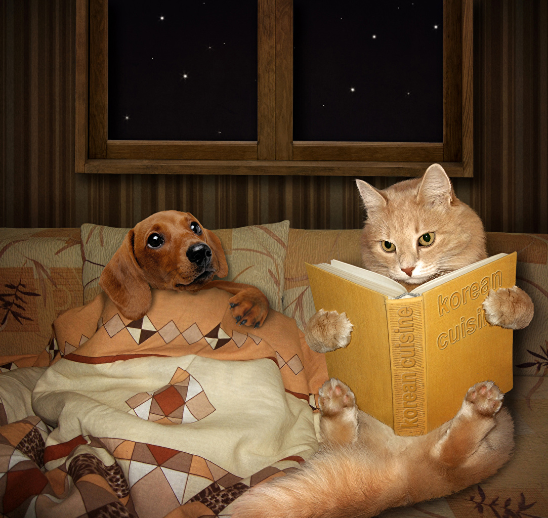 Image animal cat dog Creative books read Animals Cats Dogs Book Reading