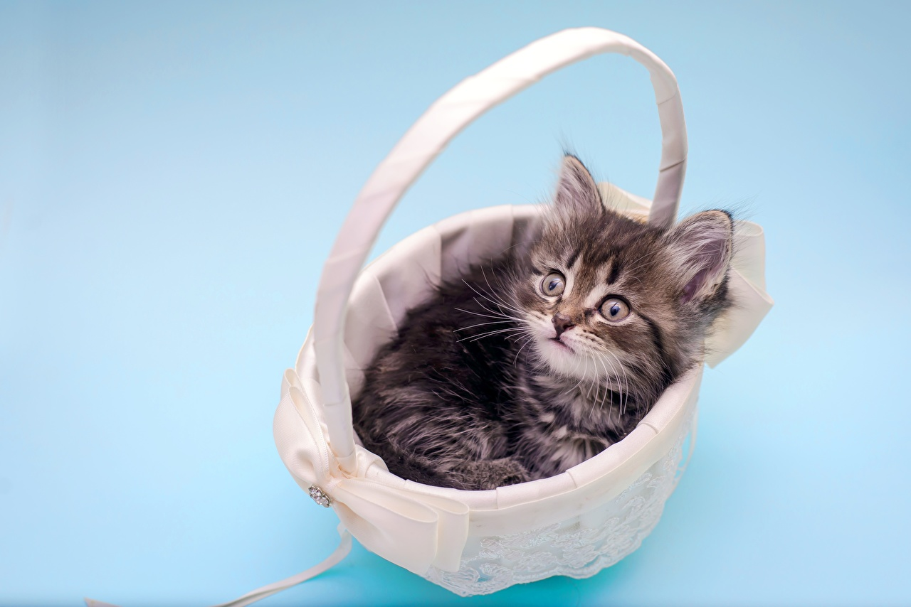 Desktop Hintergrundbilder Katzenjunges Hauskatze Weidenkorb Tiere Kätzchen Katze Katzen ein Tier