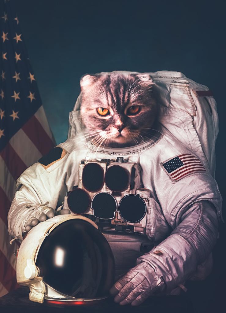 Images cat astronaut Helmet Creative Uniform Animals  for Mobile phone Cats cosmonaut Cosmonauts animal