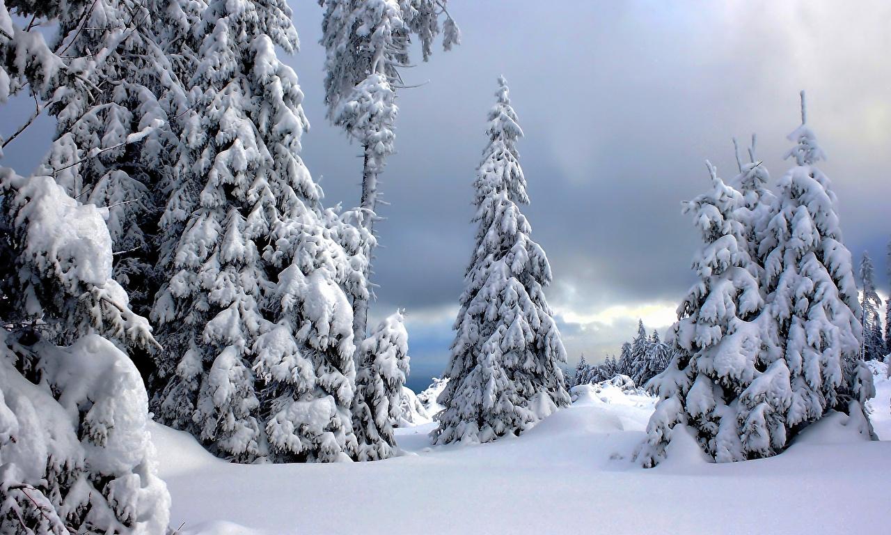Desktop Wallpapers Germany Harz National Park Winter Spruce Nature park Snow Parks