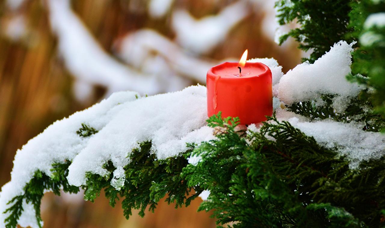Bilder von Winter Feuer Schnee Ast Kerzen Flamme