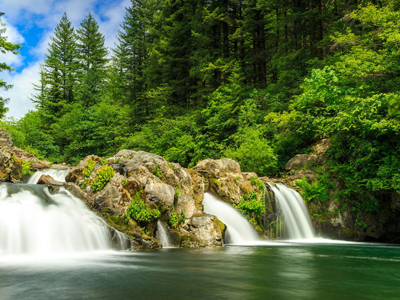 Bilder von USA White River Falls State Park Natur Wasserfall Wälder Vereinigte Staaten