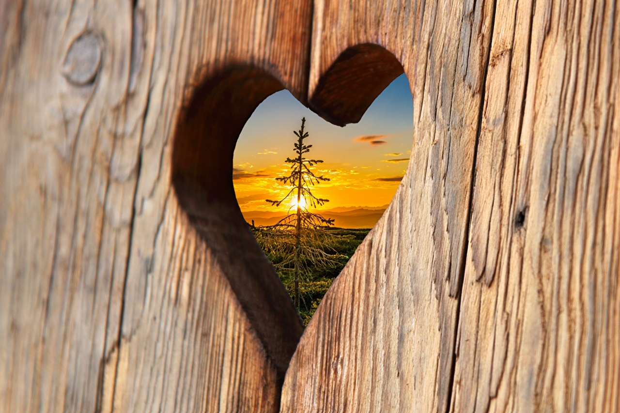 Photos Heart Spruce Sunrises and sunsets Boards Wood planks