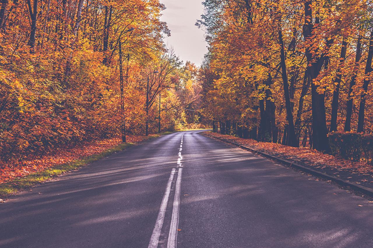 Bilder von Natur Herbst Wege Wälder Bäume Straße