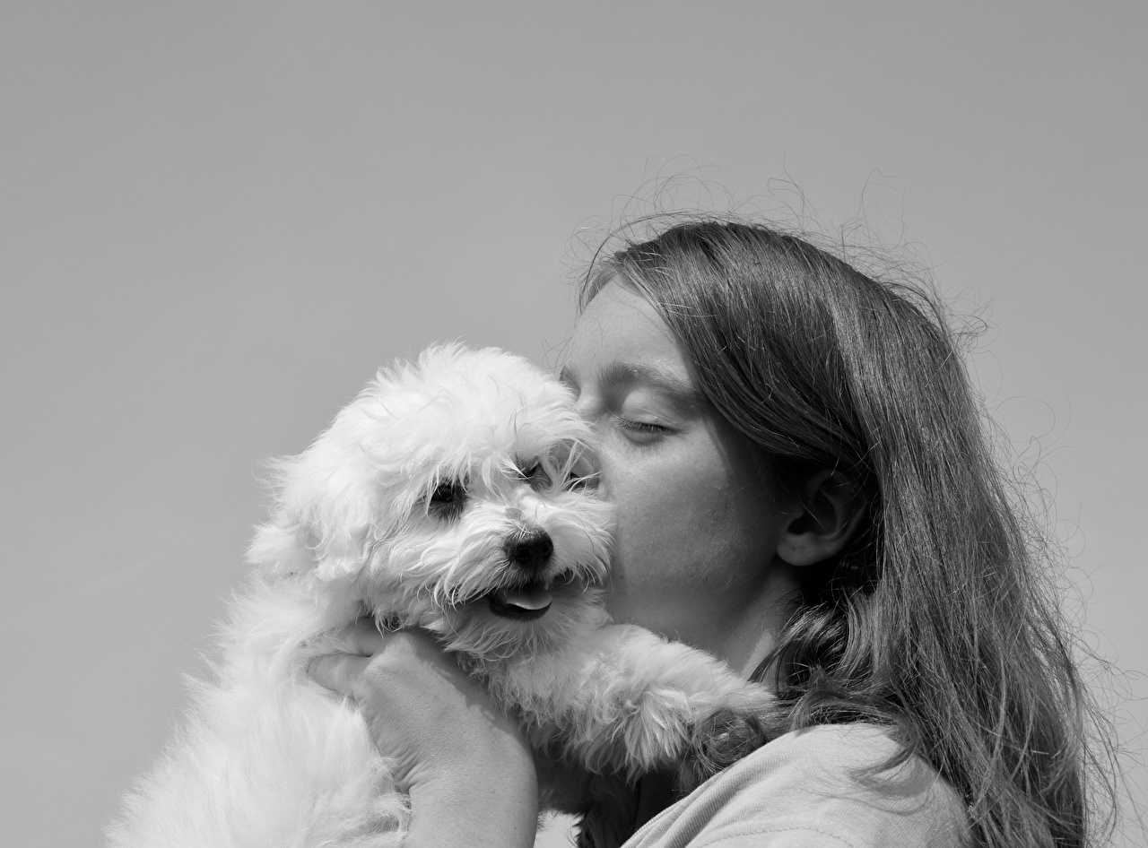 Images Dogs Kiss 2 Hair Black and white Staring Animals dog kisses kissing Two Glance animal