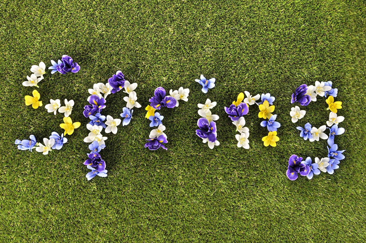Pictures English Spring text Flowers Lawn flower lettering Word - Lettering