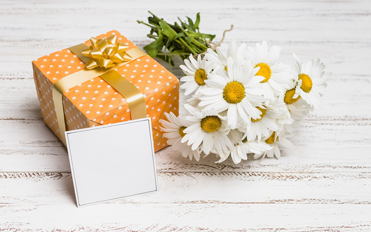 Wallpapers Gifts Flowers Camomiles Template greeting card present