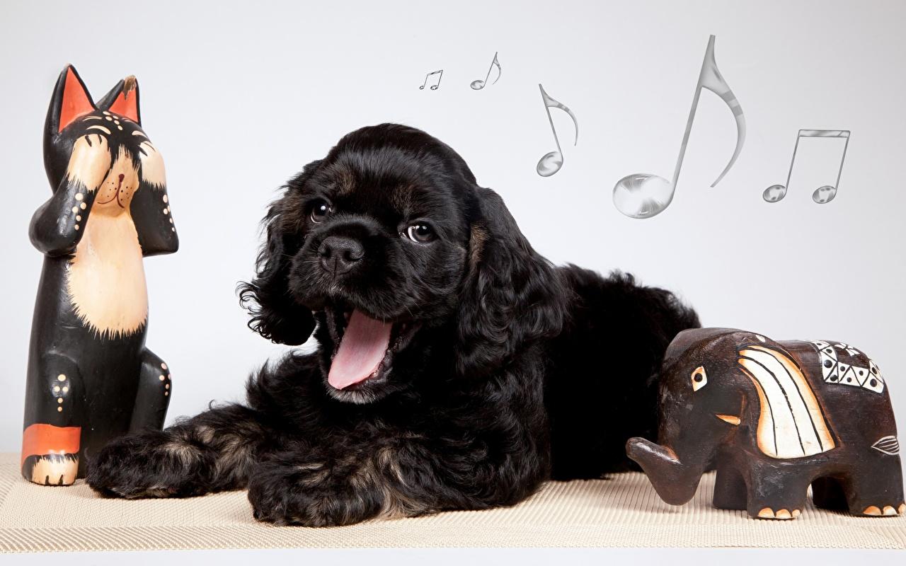 Pictures Puppy Spaniel Dogs cocker spaniel Black animal puppies dog Animals