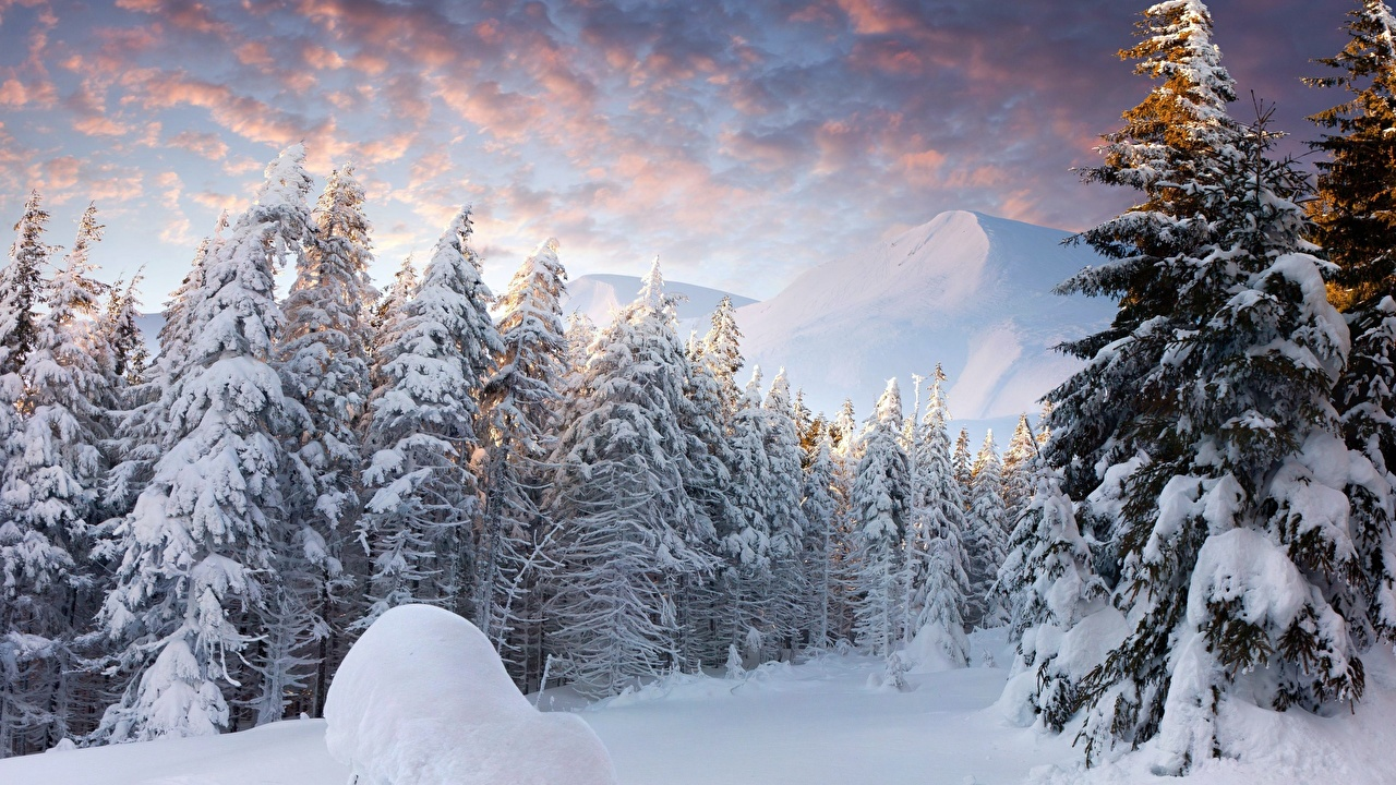 Wallpaper Winter Nature Snow forest Sunrises and sunsets landscape photography Scenery Forests sunrise and sunset