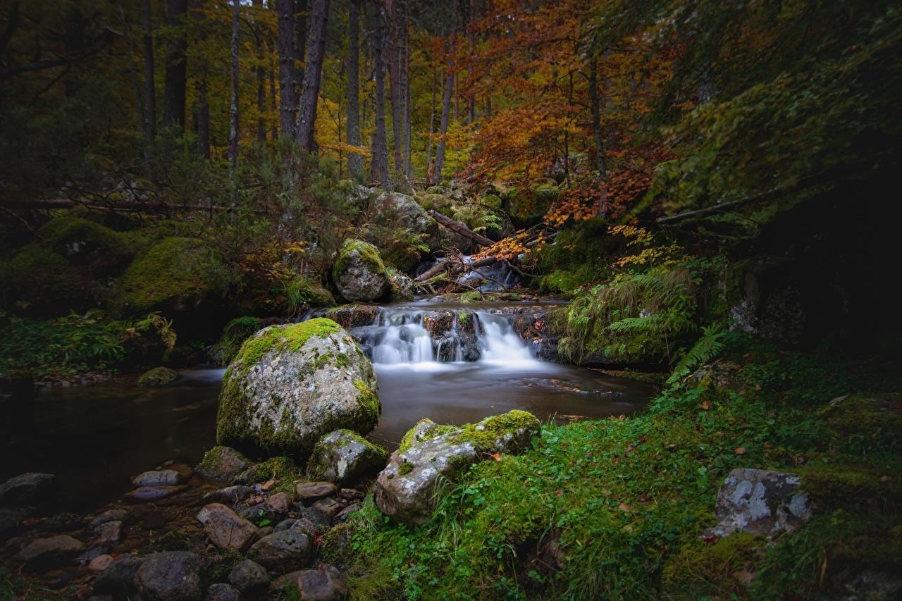 Fotos von Natur Herbst Bäche Steine Laubmoose Bach Stein
