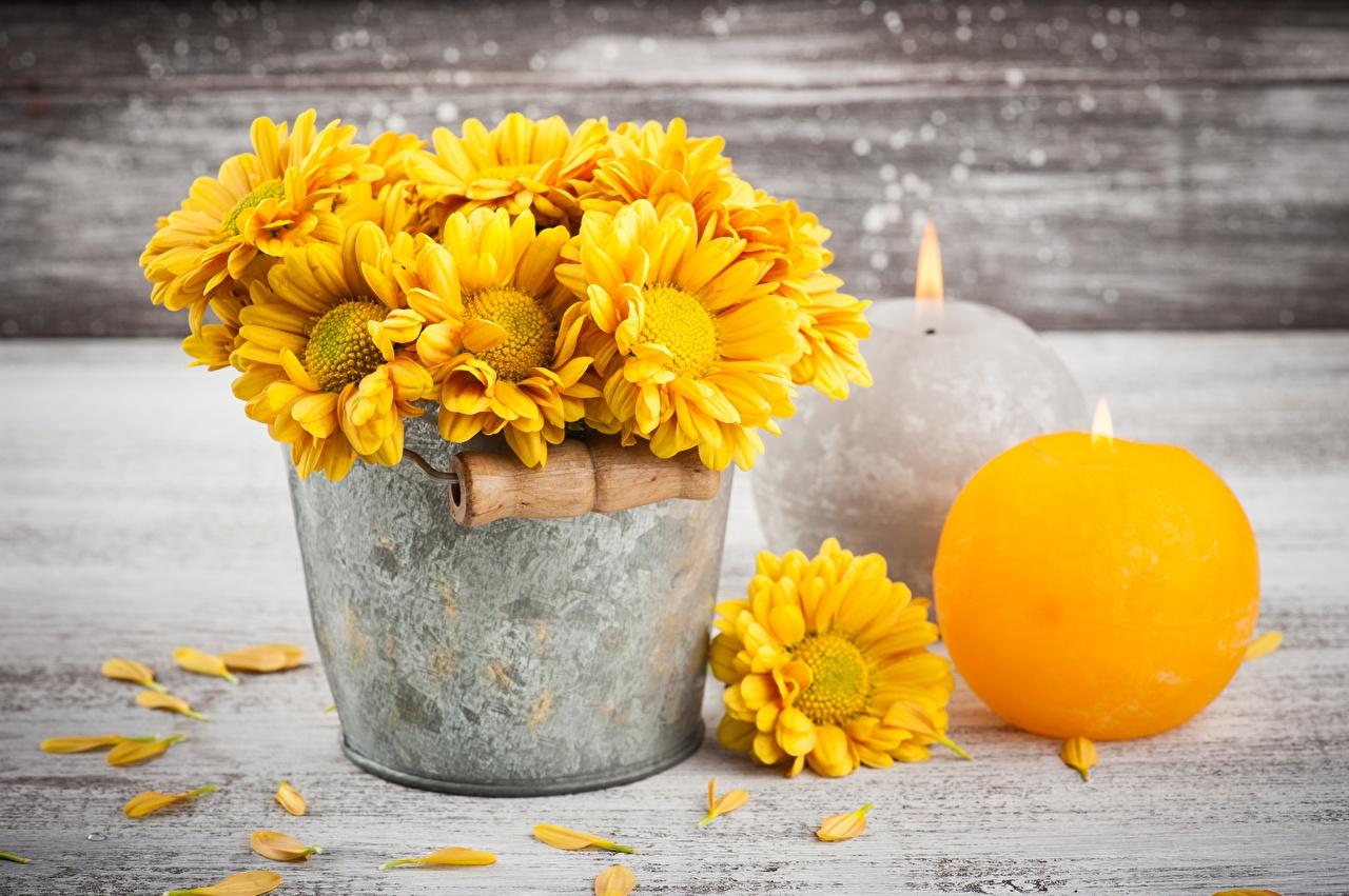 Photo Yellow Bucket Mums flower Candles Flowers Chrysanths Chrysanthemums