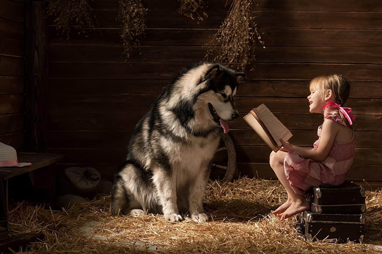 Cão Tábuas de madeira Menina Livro Malamute-do-alasca Mala Sorrir Palha Está lendo criança, animalia, um animal, cães, cachorro, livros Crianças Animalia