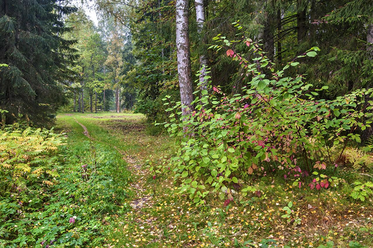 、ロシア、サンクトペテルブルク、公園、秋、Pavlovsk、木、木の葉、登山道、自然、