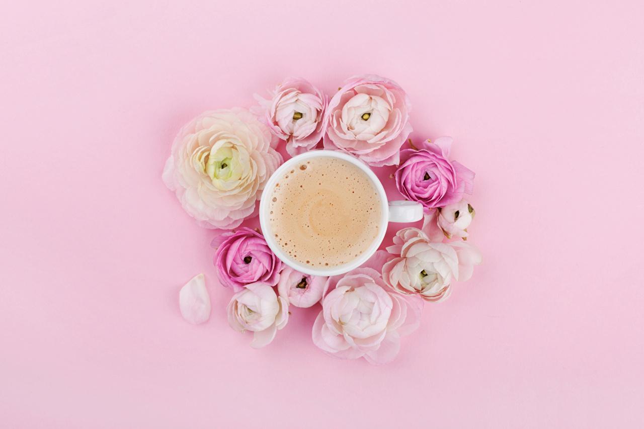 Immagini Caffè Cappuccino Fiori ranunculus alimento Sfondo rosa Vista dall'alto Tazza fiore Ranuncolo Cibo
