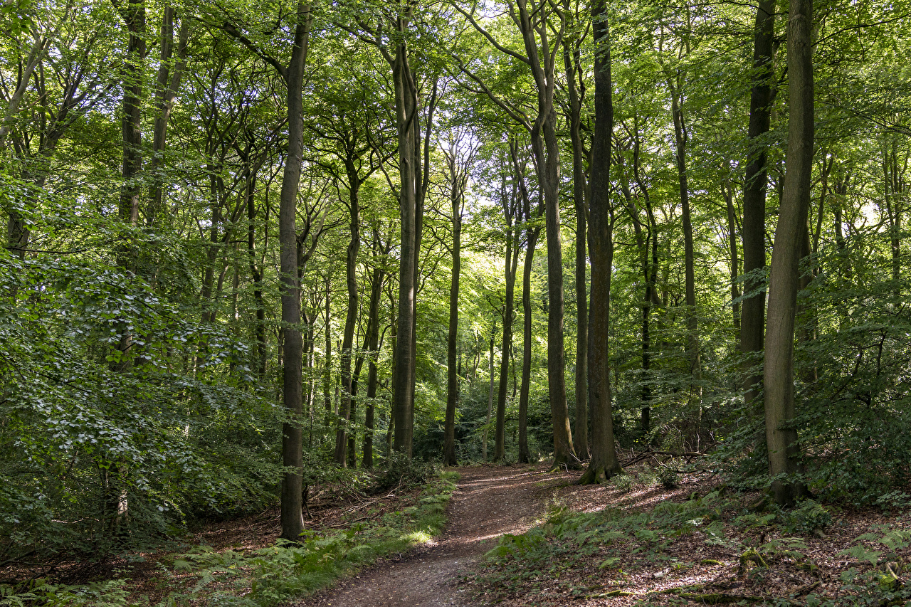 Pictures England Bradenham Trail Nature forest Trees path Forests