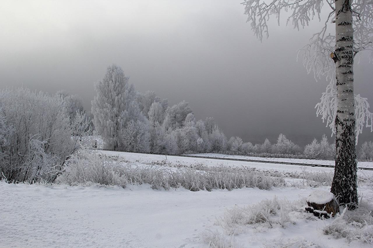 、冬、木、雪、カバノキ属、自然、
