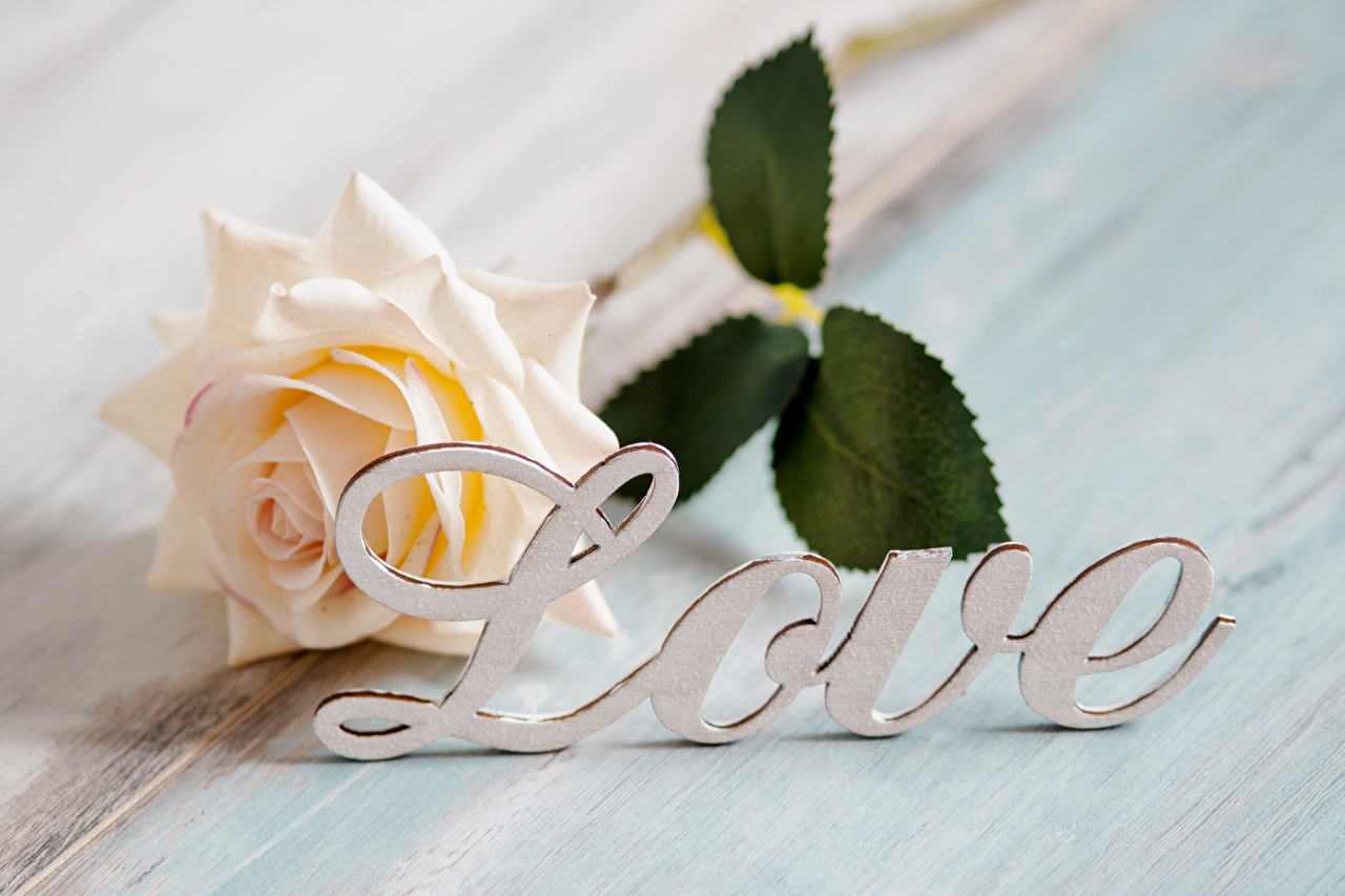 Image English rose Love Flowers lettering Roses text flower Word - Lettering