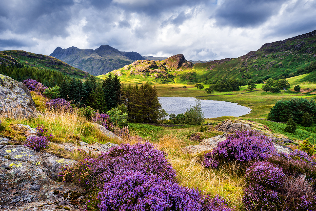 Picture United Kingdom Cumbria Nature Spruce mountain Lake Hill lavender Mountains Lavandula