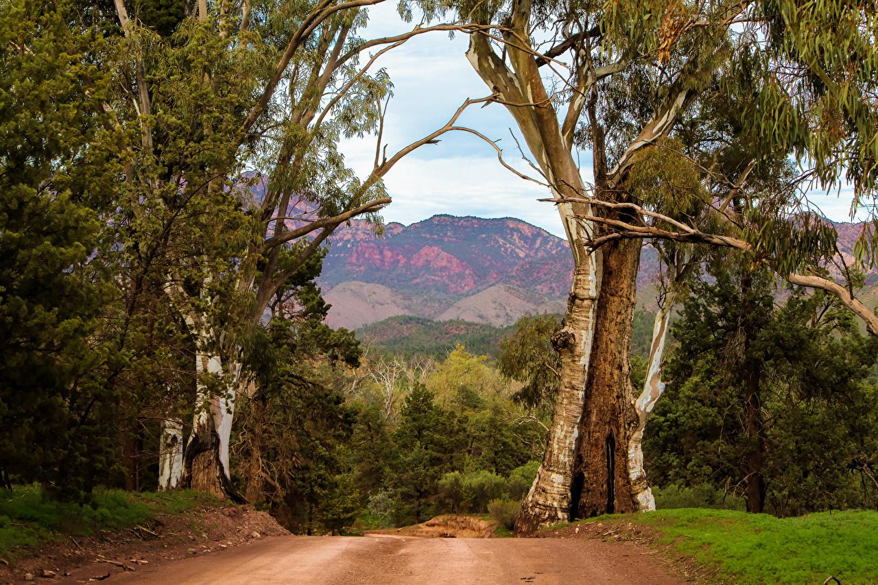 Wallpaper Australia Nature Trunk Tree Trees