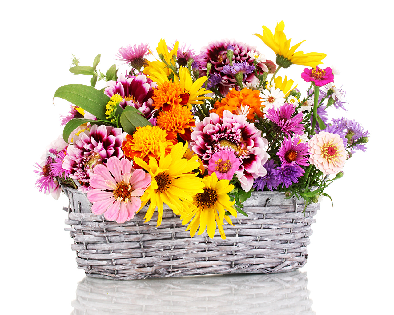 Photo Asters Zinnia flower Dahlias Tagetes Wicker basket Flowers