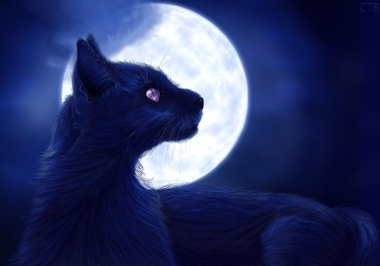 壁紙 飼い猫 描かれた壁紙 夜 月 動物 ダウンロード 写真