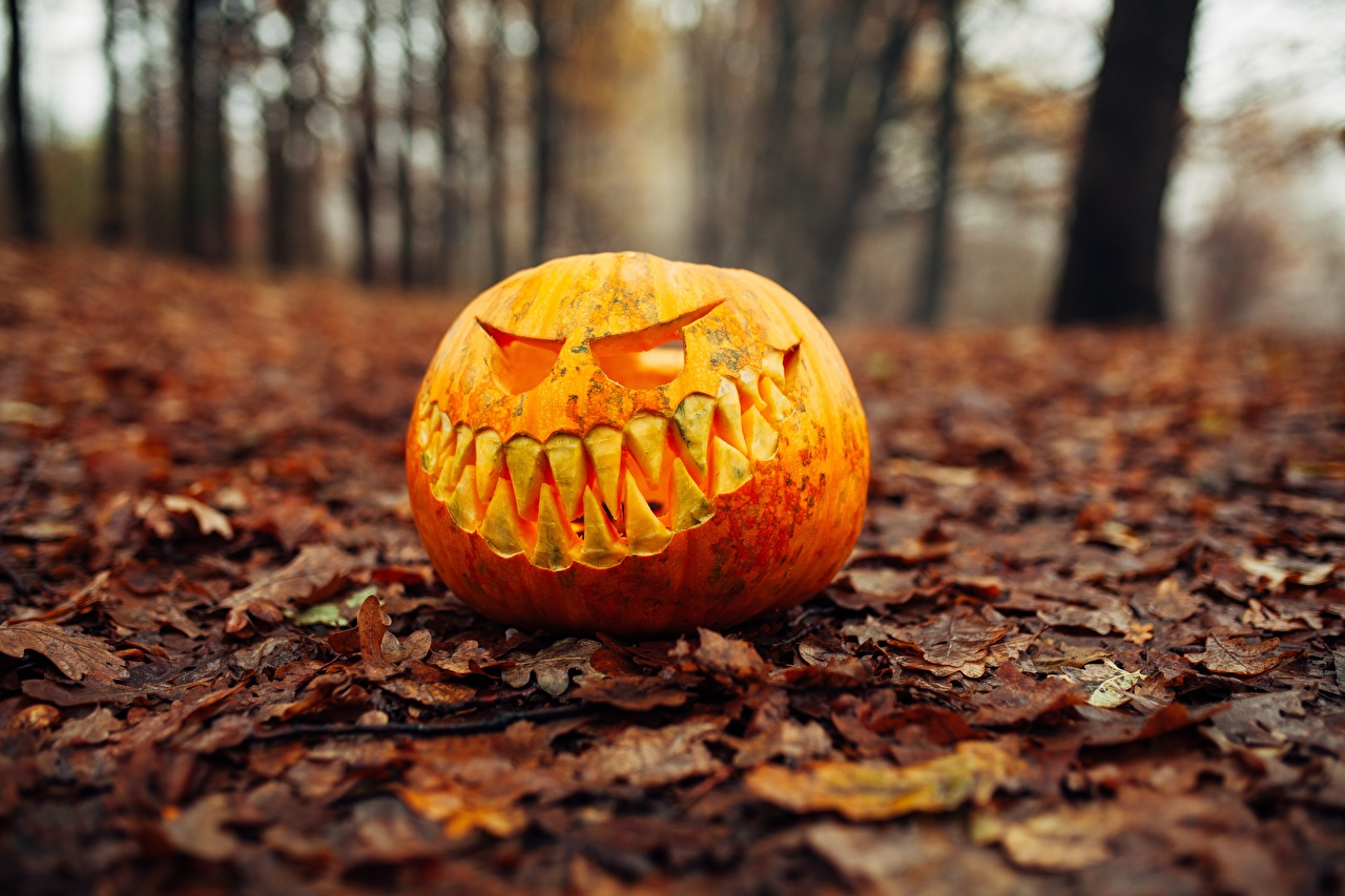 Wallpaper Leaf Bokeh Autumn Pumpkin Halloween Foliage blurred background
