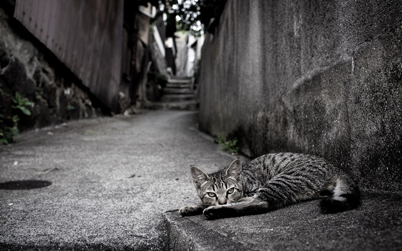 Picture Cats Street Wall Asphalt animal cat walls Animals