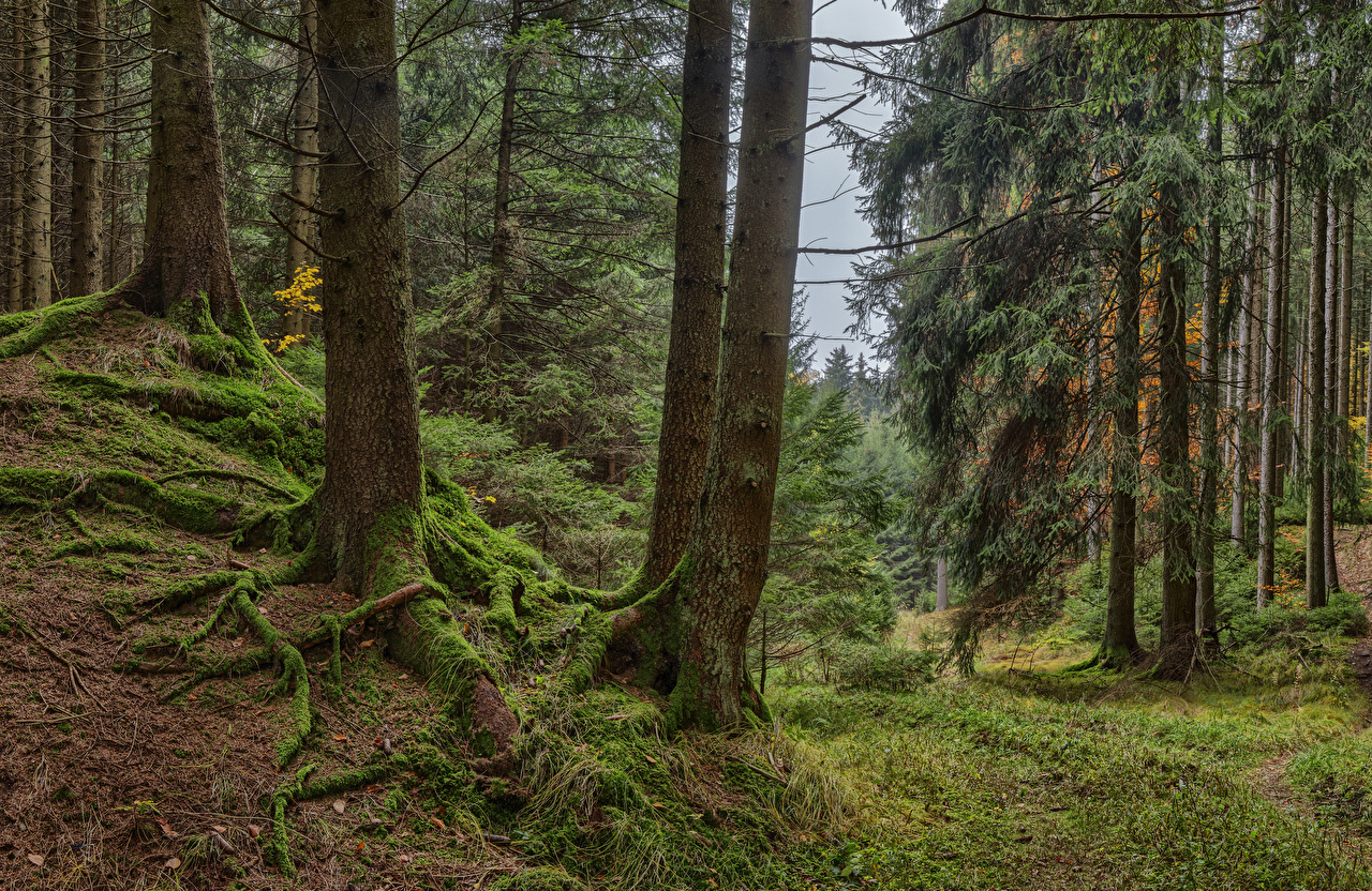 Images Bavaria Germany Nature Forests Moss Trees forest