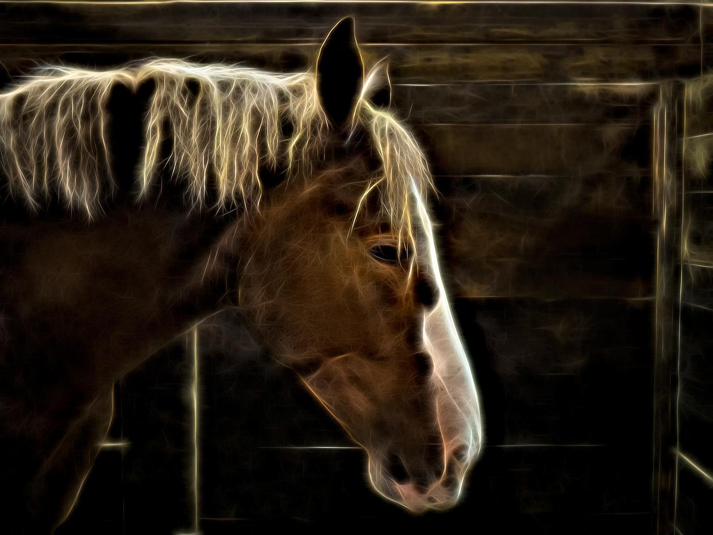 Foto's Paarden Electric Horse Hoofd Dieren paard een dier