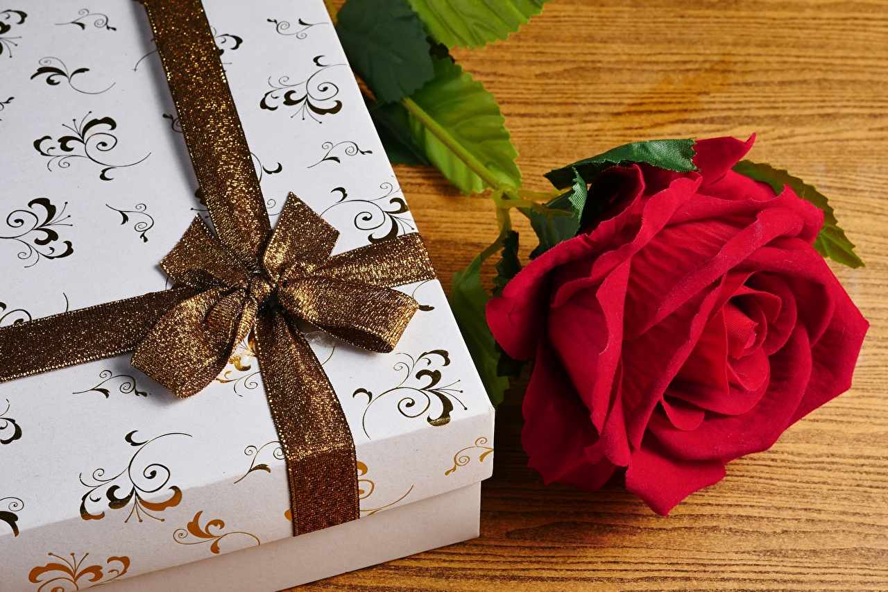 Picture rose Box Gifts Flowers Ribbon bow knot Roses flower present Bowknot