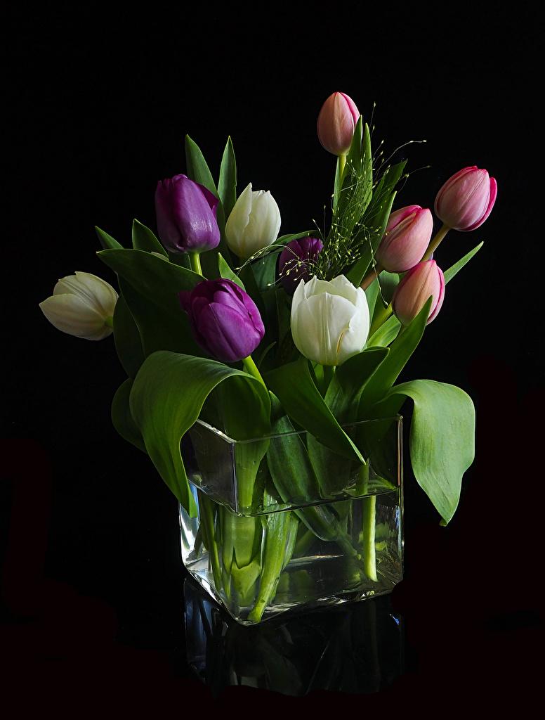 Foto Tulpen Blumen Vase Schwarzer Hintergrund  für Handy Blüte
