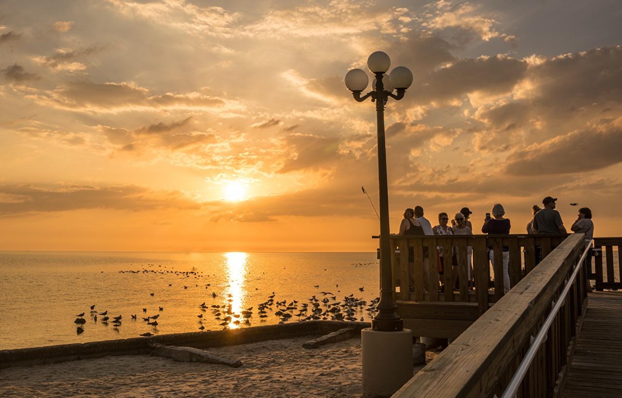 Photo Florida bird seagulls USA Sunrises and sunsets Waterfront Street lights Cities Gull Birds sunrise and sunset