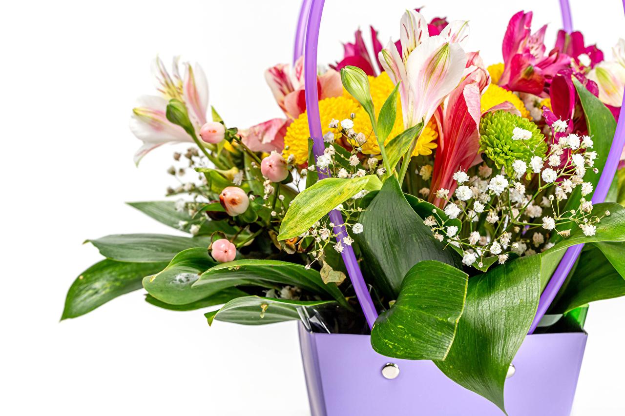 ,六出花,花束,白色背景,花卉,