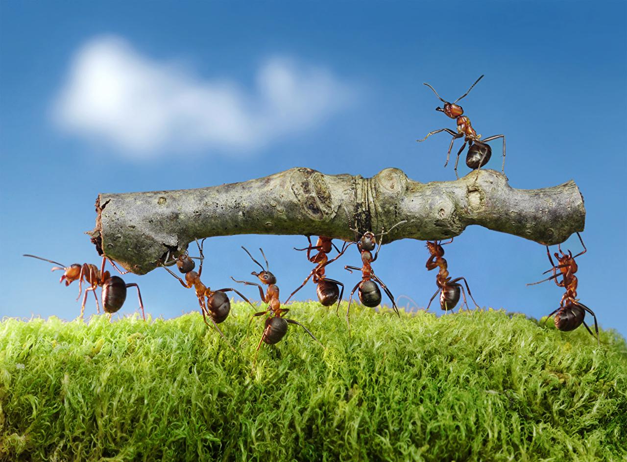 ,蚂蚁,特寫,枝,動物,