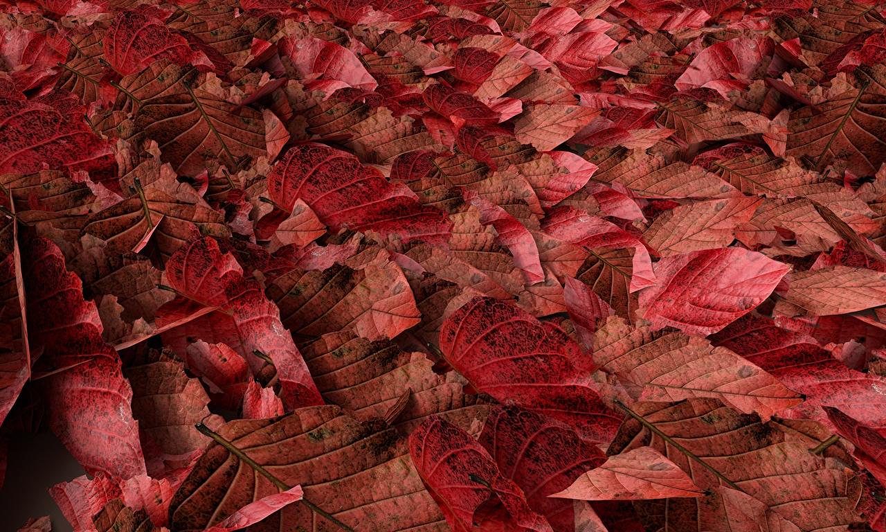 Images Texture Foliage Red Autumn Nature Leaf