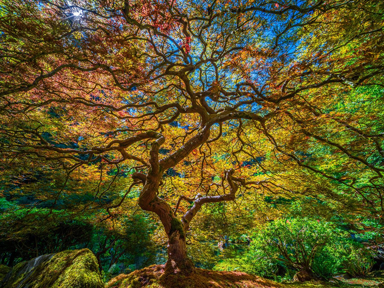 Bilder USA Portland, Japanese Garden HDRI Natur Garten Ast Bäume Vereinigte Staaten HDR