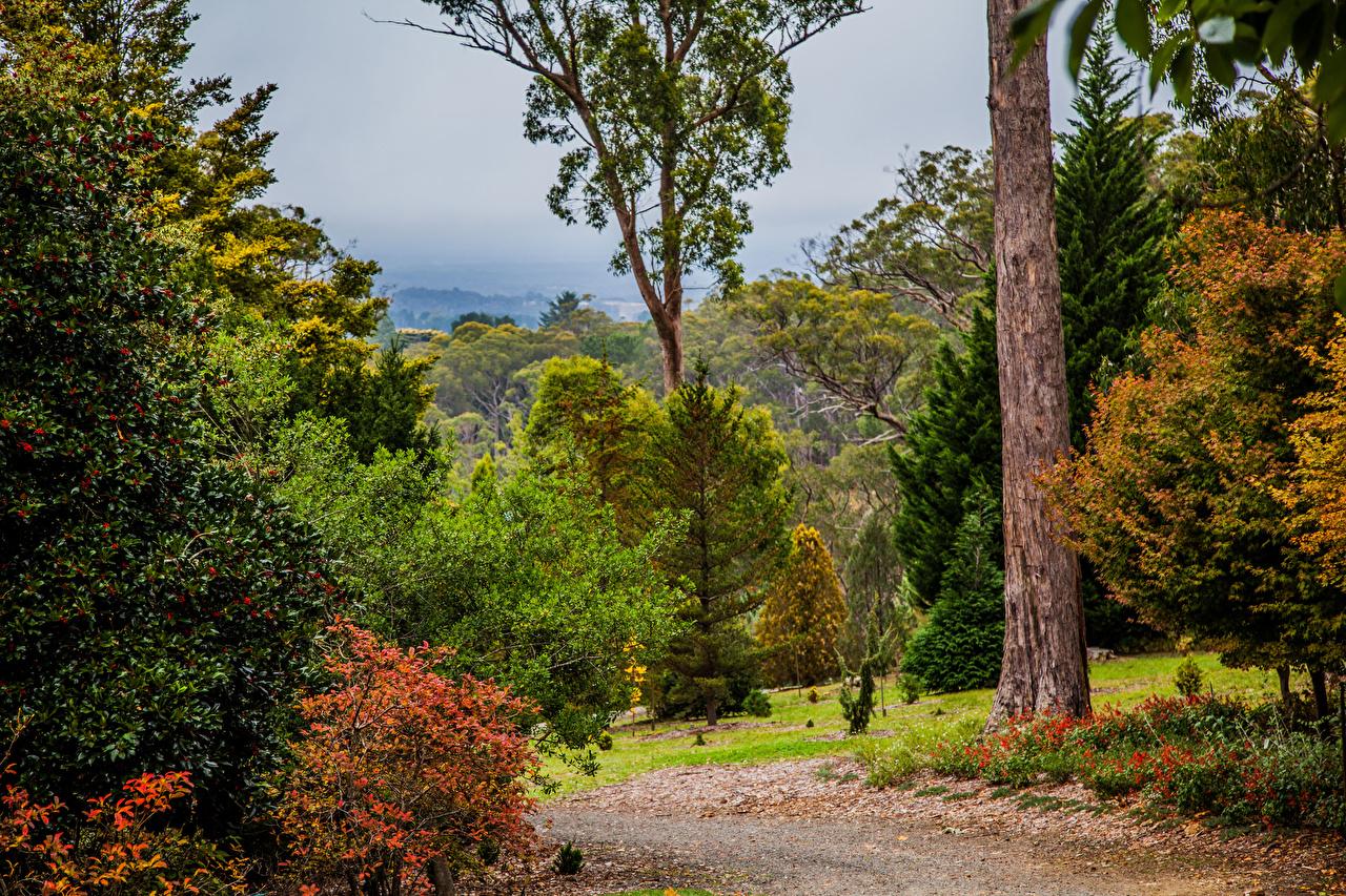 Wallpaper Australia Mount Lofty Botanic Garden Nature Parks