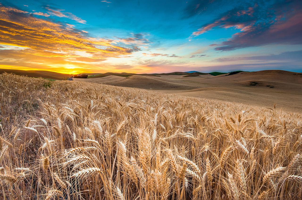 Photos HDRI Wheat Nature Sky Fields spikes Scenery Many