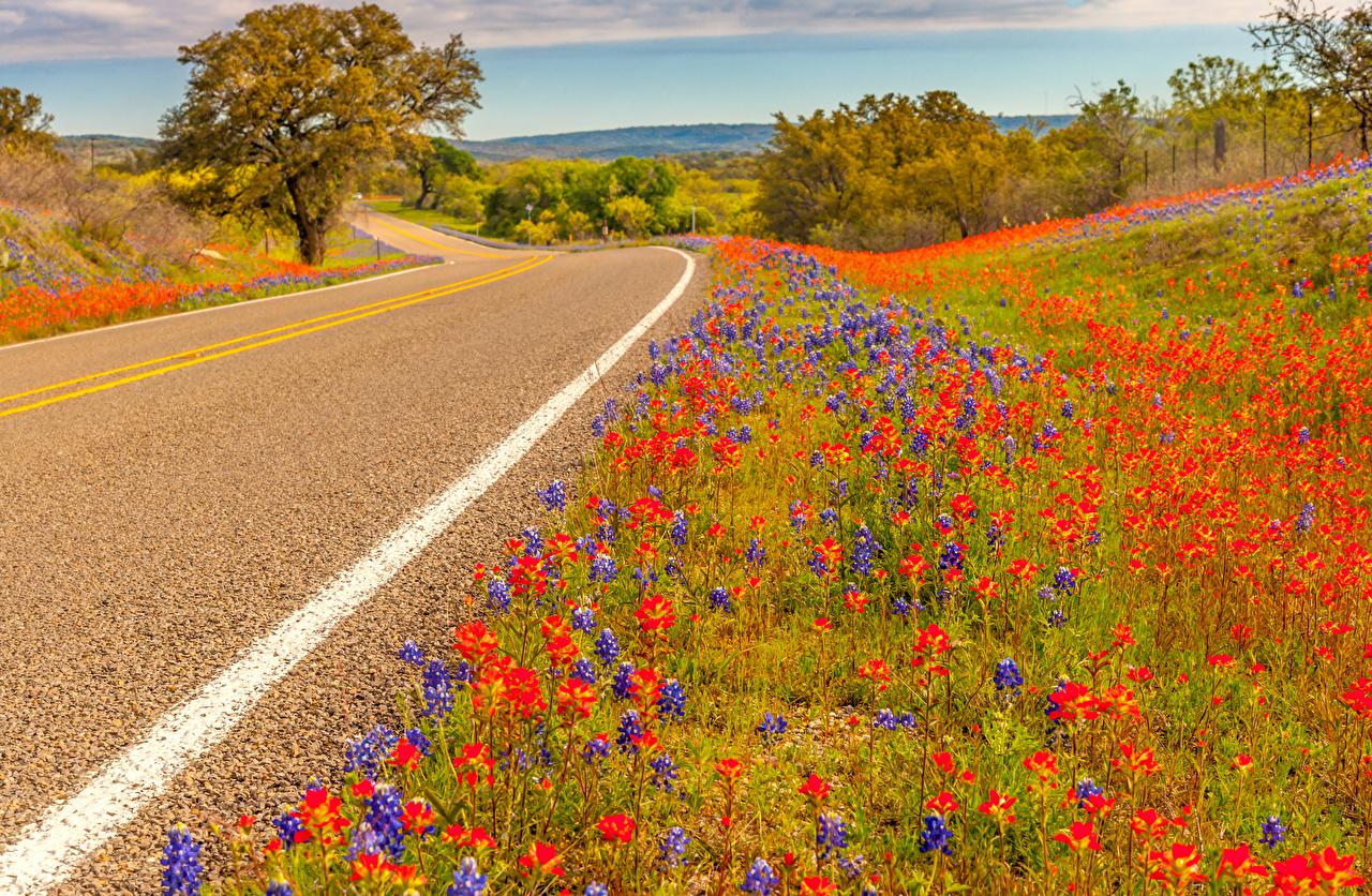 Fotos von Texas USA Natur Lupinen Straße Vereinigte Staaten Wege