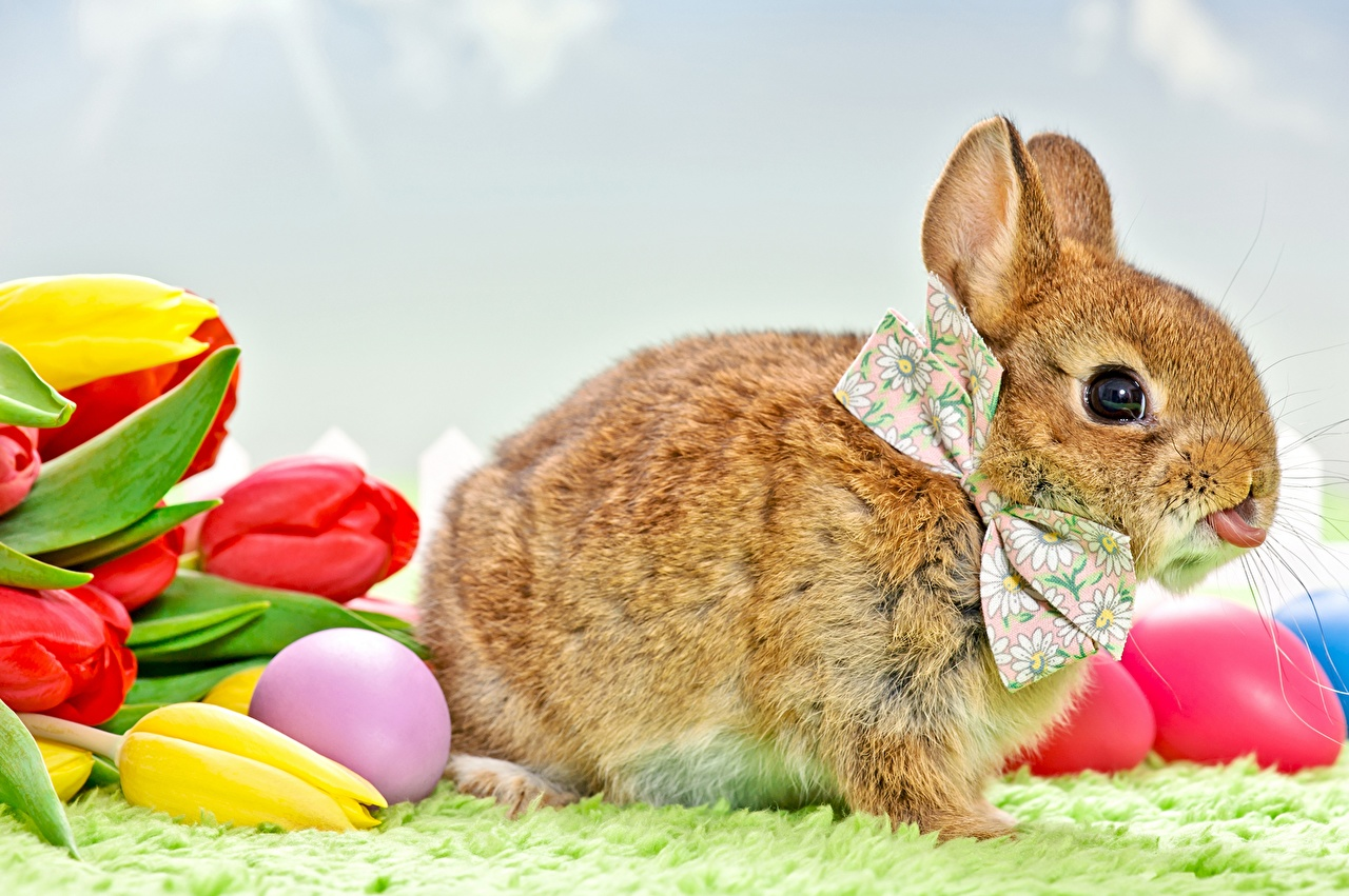 Images Easter rabbit Tulips Sky bow knot animal Holidays Rabbits tulip Bowknot Animals