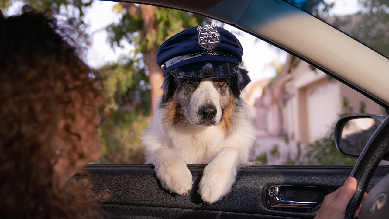 Image dog Police Funny Hat Window Animals Dogs animal
