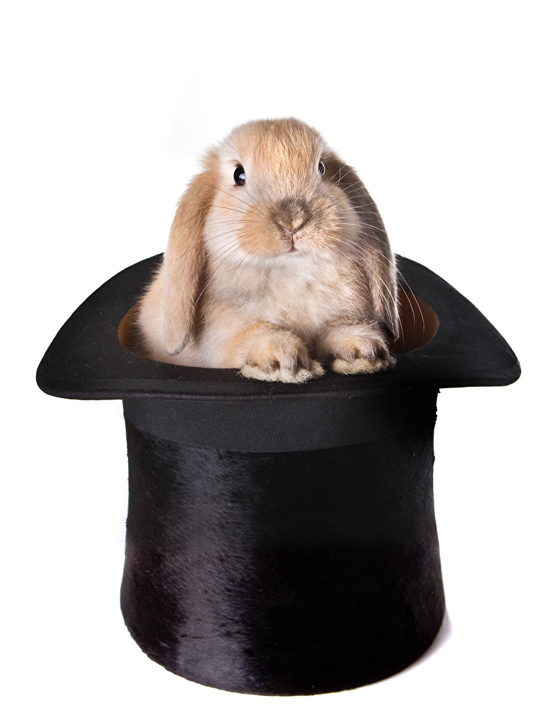 Photos Rabbits Hat Animals White background