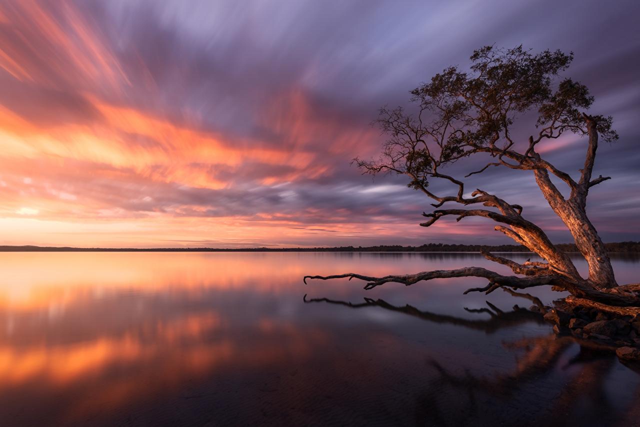 Picture Australia Lake Weyba Nature Sunrises and sunsets Trees sunrise and sunset
