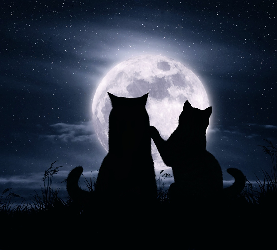 Desktop Wallpapers Cat Silhouette Two Love Moon Animals