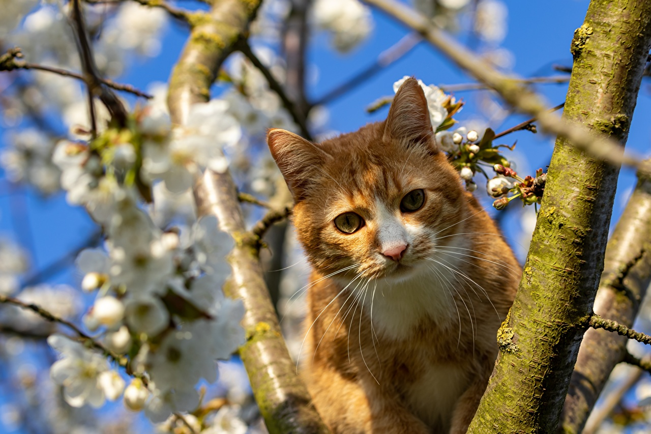 Wallpaper Cats Ginger color Whiskers Branches animal Glance cat red orange Animals Staring