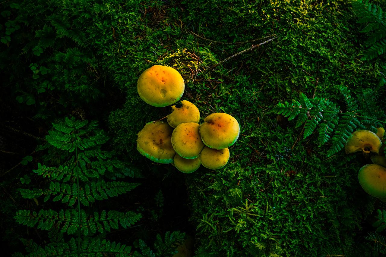 Bilder von Natur Pilze Laubmoose