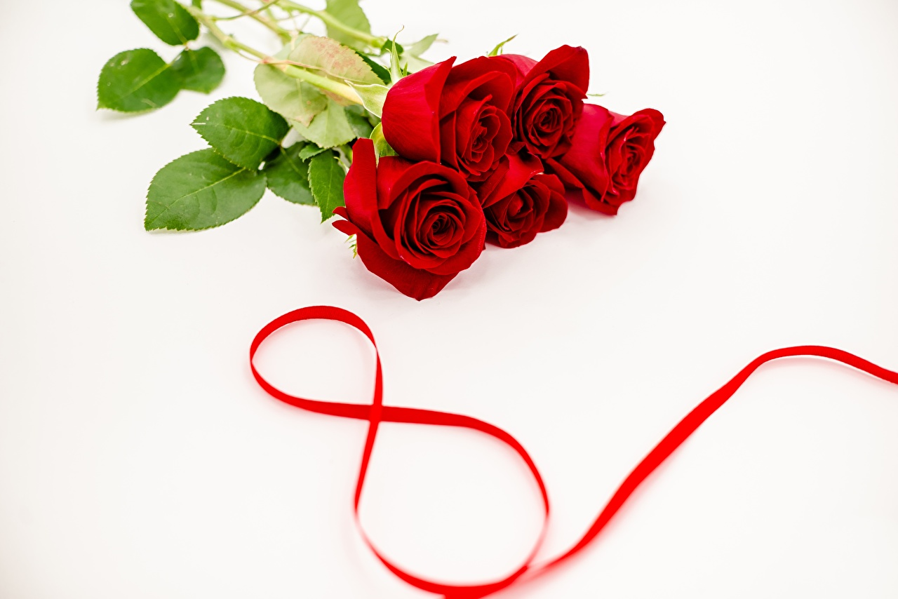 Photos International Women's Day Red Roses Flowers March 8