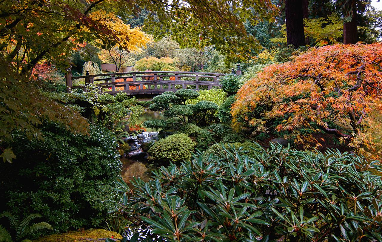 Images USA Portland Japanese Garden bridge Stream Nature Gardens Shrubs Creek brook Creeks Bridges Streams Bush
